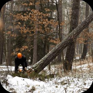 Metsa müük, raieõiguse müük, metsa ost, raieõiguse ost, metsaraie