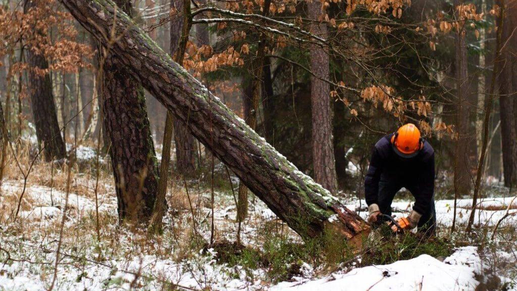 Metsa müük, raieõiguse müük